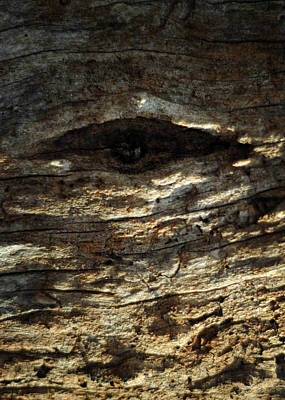 Photograph - Eye by Rebecca Sherman