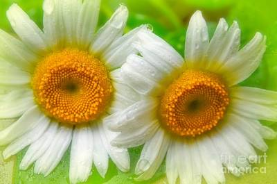 Photograph - Eye See Daisy's by Peggy Franz