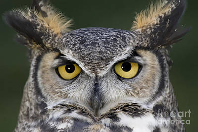 Birds Photograph - Eyes For You by Wildlife Fine Art