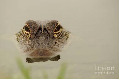 Photograph - Eyes by Lynda Dawson-Youngclaus