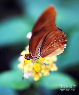 Photograph - Eyes Of A Butterfly by John Rizzuto