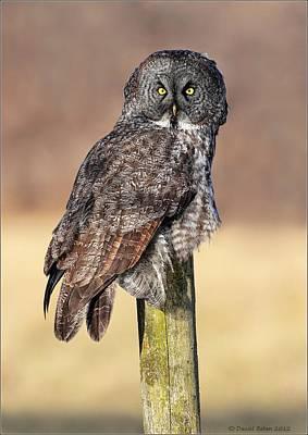 Ggo Photograph - Eyes Of A Great Gray Owl by Daniel Behm