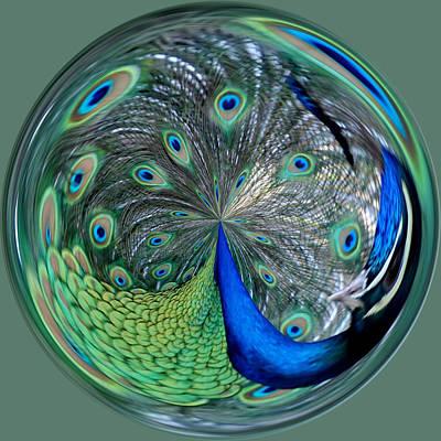 Eyes Of A Peacock Art Print by Cynthia Guinn