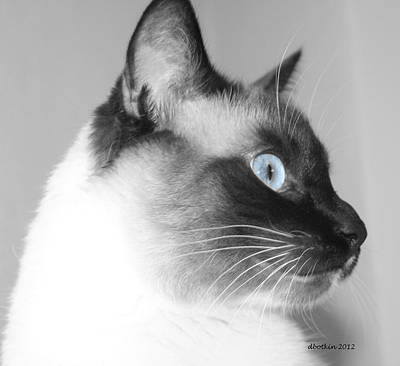 Photograph - Eyes Of Blue by Dick Botkin
