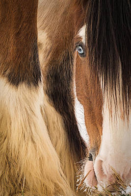 Animals Photos - Eyes of Blue by Everet Regal