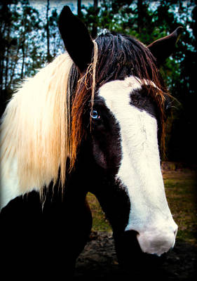 Pinto Horses Photograph - Eyes Of Blue by Karen Wiles