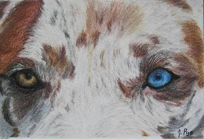 Pastel - Eyes Of Catahoula by Joan Pye