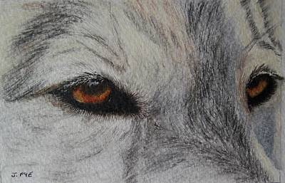 Pastel - Eyes Of The Wolf by Joan Pye