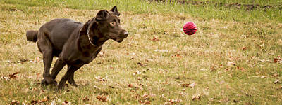 Photograph - Eyes On The Ball by Jean Noren