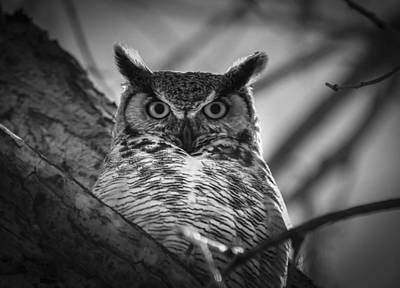 Photograph - Watcher Of  The Woods by Rae Ann  M Garrett