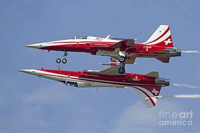 Animals Photos - F-5 Tiger Ii Aircraft Of Patrouille by Luca Nicolotti