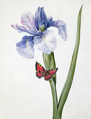 Blue Iris Painting - Blue Iris With Butterfly , 1826 by Louise D'Orleans