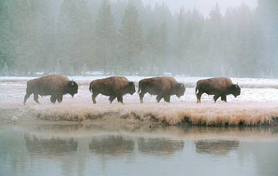 Wildlife Landscape Painting - Fab Four by Gary Crandall