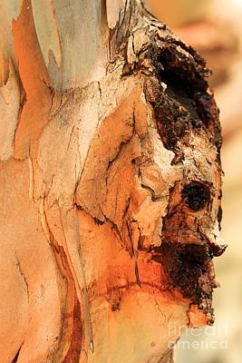 Photograph - Face In The Tree by Adam Jewell