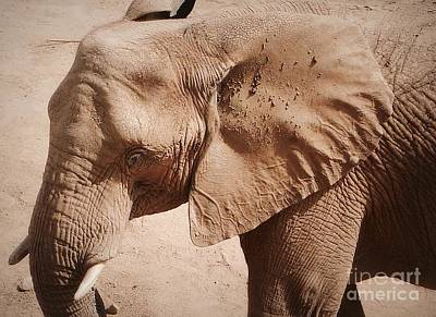 Photograph - Face Of African Elephant  by Susan Garren