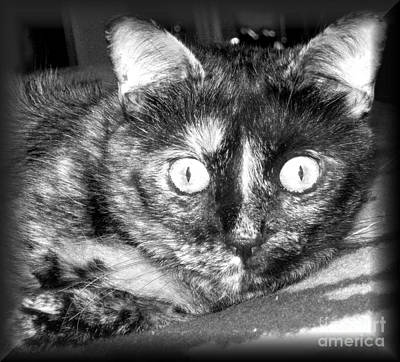 Photograph - Face Of Cat by Oksana Semenchenko