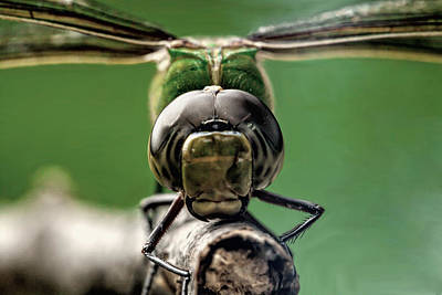 Macro Dragonfly Photograph - Face Of The Dragon by John Crothers