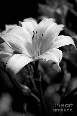 Photograph - Face The Sun In Black And White by Lee Craig