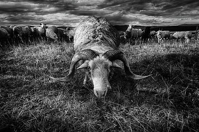 Horn Wall Art - Photograph - Face To Face by Peter Majkut
