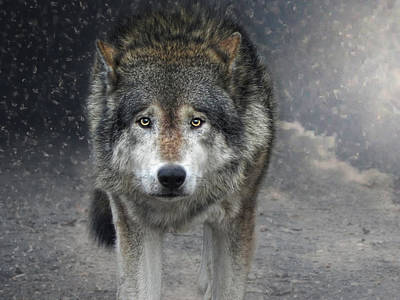 Animals Photos - Face To Face With The Wolf by Joachim G Pinkawa