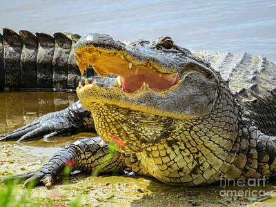 Crocodile Photograph - Face To Face by Zina Stromberg