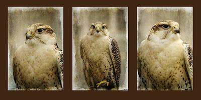 Faces Of Strength - Triptych Art Art Print by Jordan Blackstone