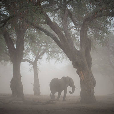 Zimbabwe Photograph - Facing The Sandstorm by Giovanni Casini