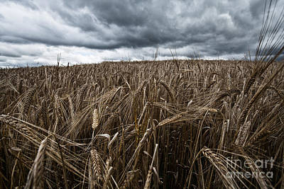 Field. Cloud Photograph - Facing The Storm Color by John Farnan