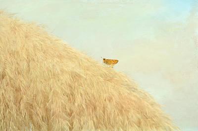 Photograph - Facing Uphill by Fraida Gutovich