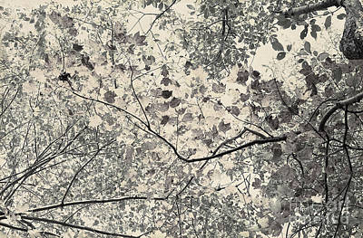Faded Autumn Leaves Art Print by Ted Guhl
