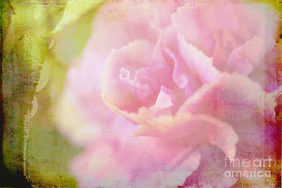 Photograph - Faded Carnation by Judi Bagwell