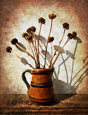Photograph - Faded Daisies by Shawna Rowe