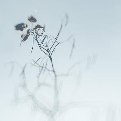 Owls - Faded dream by Zapista OU