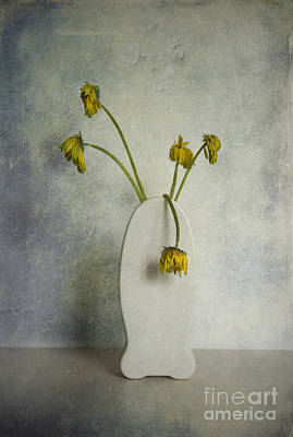 Photograph - Withered Flowers by Hans Janssen
