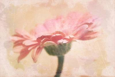 Gerber Daisy Photograph - Faded Gerber by Cathie Tyler