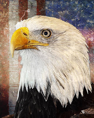 American Eagle Digital Art - Faded Glory by Bill Tiepelman