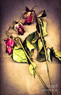 Dried Photograph - Faded Glory by Jan Bickerton