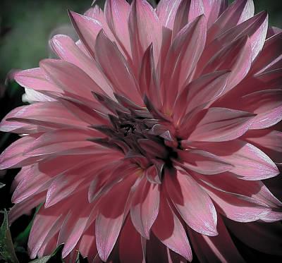 Photograph - Faded Pink Dahlia by Athena Mckinzie