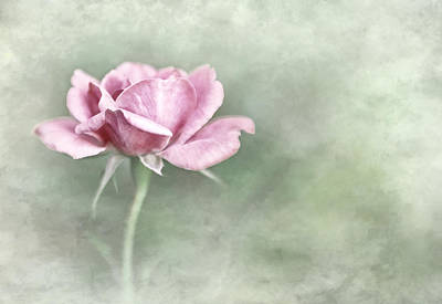 Photograph - Faded Rose by David and Carol Kelly