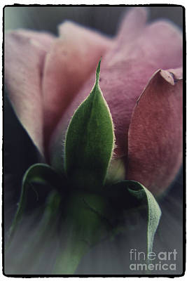 Photograph - Faded Rose by Lori Mellen-Pagliaro