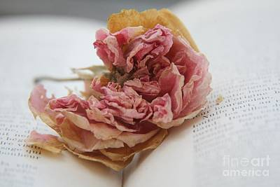 Photograph - Faded Rose by Lynn England