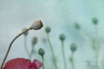 Seedpods Photograph - faded summer III by Priska Wettstein