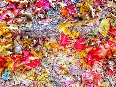 Photograph - Fallen Hues by Marianna Mills