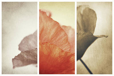 Triptych Photograph - Fading Memories by Gustav Davidsson