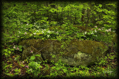 Angels And Cherubs - Fading Trilliums by Phill Doherty