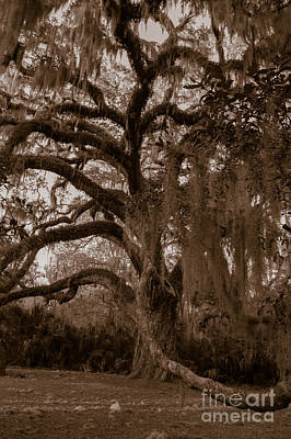 Photograph - Fairchild Oak - Handshake by Kathi Shotwell