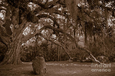 Fairchild Oak Art Print