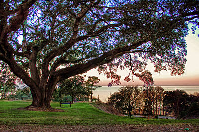 Digital Art - Fairhope Bayview Bench At Sunset by Michael Thomas