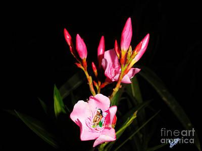 Fairy And Nerium Flower Art Print