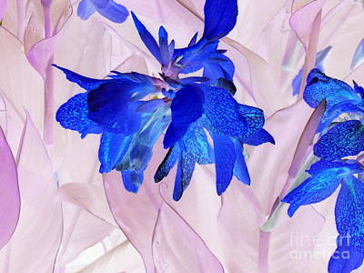 Photograph - Fairy Flowers by Pauli Hyvonen
